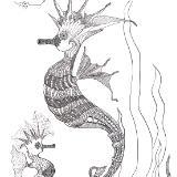 """""""Sea Horse"""""""